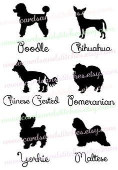 Small Dog Silhouettes Svg - Pomeranian - Poodle - Digital Cutting File - Instant Download - Graphic Design - Svg, Dxf, Jpg, Eps, Png