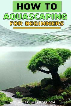 Aquascaping For Beginners.