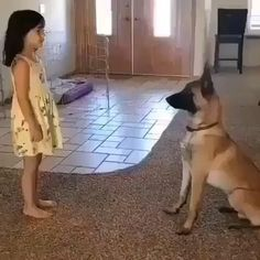 Funny Animal Jokes, Funny Animal Pictures, Animal Memes, Animal Humor, Funny Minion, Funny Images, Funny Jokes, Cute Funny Dogs, Cute Funny Animals