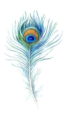 Watercolor Peacock Feather Peacock feather - would make an awesome tattoo. Definitely brighter colors though!Feather Tattoos, Designs And Ideas : Page 7 MásWatercolor illustration of Peacock feather isolated on white.water color peacock feather as a tatt Peacock Feather Tattoo, Feather Drawing, Feather Art, Feather Tattoos, Peacock Feathers Drawing, Tattoo Bird, Feather Design, Wrist Tattoo, Watercolor Peacock Tattoo