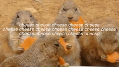 13 Haikus That Accurately Portray Your Love Of Cheese