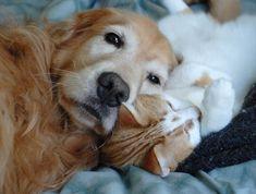 fluffy pillow pet