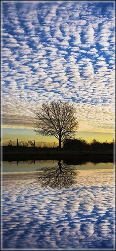 reflection of the tree and sky
