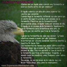 Reflexiones de Superación; El Aguila y La Tormenta | | Superacion y Motivacion