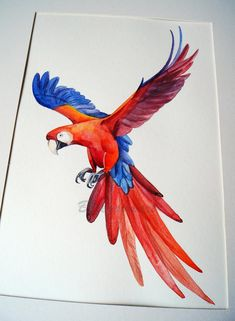 Parrot Drawing, Parrot Painting, Painting & Drawing, Watercolor Illustration, Watercolor Art, Afrique Art, Airbrush Art, Pencil Art Drawings, Color Pencil Art