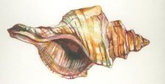 watercolor shell