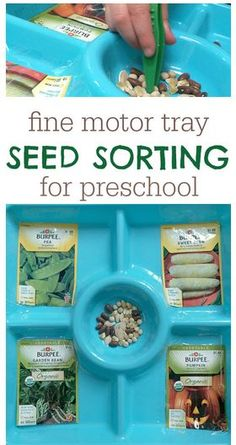 Fine Motor Activity of the Week: Seed Sorting  - pinned by @PediaStaff – Please Visit ht.ly/63sNtfor all our pediatric therapy pins