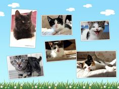 http://www.wearvalley.cats.org.uk/wearvalley/adopt-a-cat