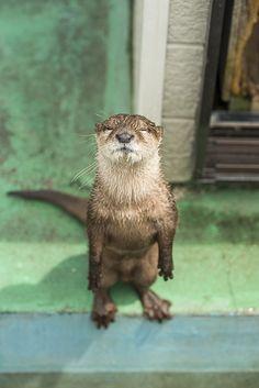 Otter wants a kiss. MUAH!