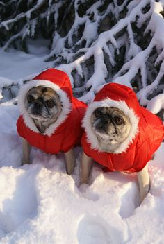Winter Warmth...