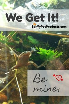 Be mine. We Get It!  SpiffyPetProducts.com Dwarf Frogs, Frog Tank, Pet Frogs, Funny Animals, Cute Animals, Aquarium Fish, Aquarium Ideas, Gift Guide For Him, We Got It