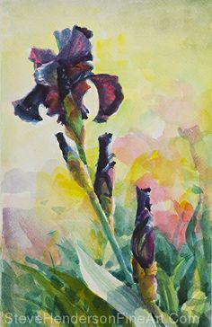 Purple Iris by Steve Henderson Watercolor ~ 15 x 9