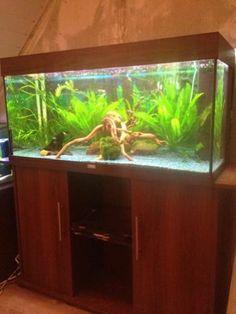 https://i.pinimg.com/236x/47/13/b4/4713b44ca5955e9596b5becb3feff0c6--aquaria.jpg