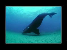Brian Skerry reveals ocean's glory -- and horror