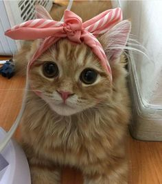 """disgustinganimals: """" not even a ribbon can fix this """" always make sure your accessories complement your nose"""