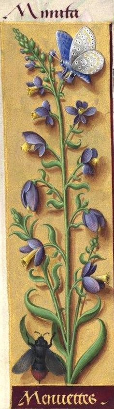 Menuettes - Minuta (Polygala vulgaris L. = laitier commun) -- Grandes Heures d'Anne de Bretagne, BNF, Ms Latin 9474, 1503-1508, f°71v