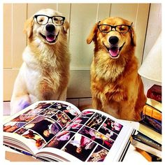 2 scholarly puppies, Barney & Barbos!  Congrats to @jenniferadhya & thanks for posting!