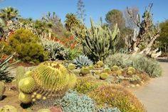 Un jardín de cactus tropicales con una gran variedad de especies de cactus.