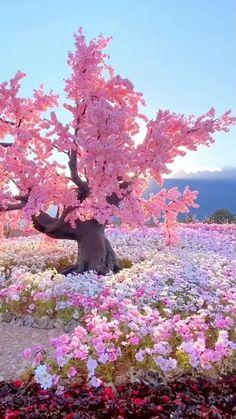 Beautiful Nature Pictures, Beautiful Photos Of Nature, Beautiful Nature Wallpaper, Beautiful Places To Travel, Amazing Nature, Nature Photos, Beautiful Landscapes, Beautiful Gardens, Beautiful Flowers