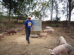 Joel Salatin discovers a startling government interest for reversing declining rural population, and it's not to provide more and better food for Americans.
