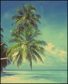summer, palm, sea, ocean