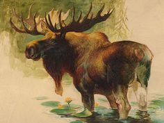 Ezra Tucker   ACRYLIC Moose Pictures, Hunting Pictures, Moose Deer, Bull Moose, Elk Drawing, Moose Nursery, Realism Art, Reno, Outdoor Art