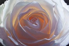 Creation V Oil painting of white rose by Irish Artist Vincent Keeling Signed limited edition prints available