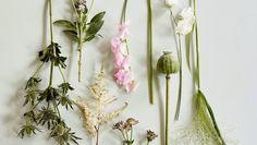 insectos dibujo botanica - Buscar con Google