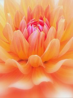 Soft Peach by Spree5326 on deviantART