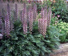 Herbaceous Border, Herbaceous Perennials, Garden Shrubs, Shade Garden, Plantes Alpines, Hardy Geranium, Alpine Plants, Primroses, Heuchera