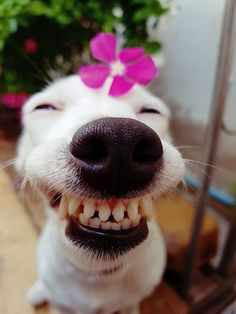 Smiling animals with braces. Smiling Animals, Smiling Dogs, Happy Animals, Animals And Pets, Cute Dogs And Puppies, Baby Dogs, Cute Little Animals, Cute Funny Animals, Funny Animal Memes