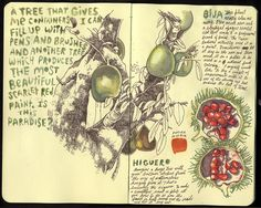 These are a couple sketches from various sketchbooks done here in the Dominican Republic. Moleskine Sketchbook, Arte Sketchbook, Sketchbook Pages, Sketch Journal, Kunstjournal Inspiration, Sketchbook Inspiration, Botanical Art, Botanical Illustration, Art Journaling