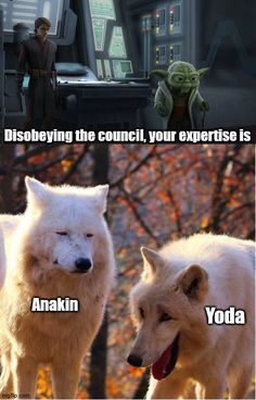 Star Wars Jokes, Star Wars Facts, Star Wars Comics, Funny Star Wars, Star Wars Rebels, Star Wars Clone Wars, Star Trek, Yoda Funny, Star Wars Pictures