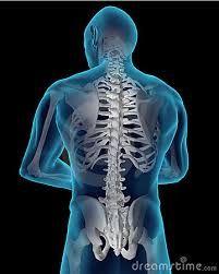 Image result for spine