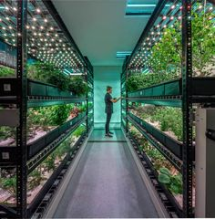 Vertical Farming Disrupt the Agriculture Industry? Is Vertical Farming the Future of Your Salad?Is Vertical Farming the Future of Your Salad? Indoor Farming, Hydroponic Farming, Hydroponic Growing, Indoor Gardening, Nft Hydroponics, Gardening Tips, Fish Farming, Aquaponics System, Sustainable Farming