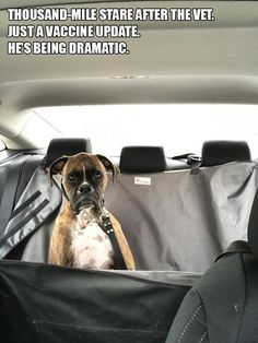 Figure out more details on boxer dogs. Visit our website. Boxer And Baby, Boxer Love, Funny Dogs, Funny Animals, Cute Animals, Animal Memes, Funny Boxer Puppies, Animal Antics, Animal Humor