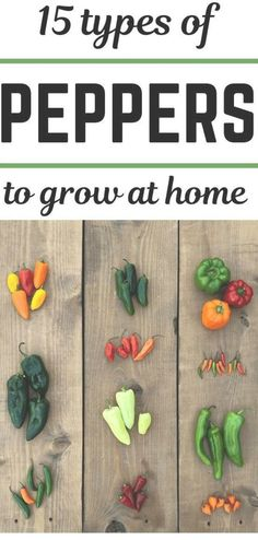 This post sponsored by Kellogg Garden is all about 15 types of peppers to grow in your garden. Learn about these pepper varieties, and then choose a few to plant in the garden. #gardeningtips #organicgardening