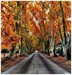 Mendoza, Argentina Mendoza, Country Roads, Photos, Originals, Earth, Countries, I Love, Buenos Aires Argentina, Pictures