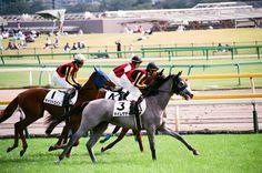 2014.10.11 Tokyo Race Course  photo by teitania