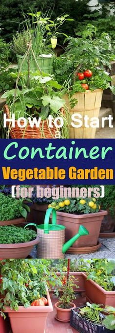 Container Gardening For Beginners Growing vegetables in pots is an excellent idea if you have a limited space, starting your own container vegetable garden gives you a chance to produce a bountiful harvest of edibles that are freshest and tastiest! Indoor Vegetable Gardening, Vegetable Garden For Beginners, Home Vegetable Garden, Organic Gardening Tips, Gardening For Beginners, Apartment Vegetable Garden, Starting A Vegetable Garden, Bucket Gardening, Vegetable Garden Fertilizer