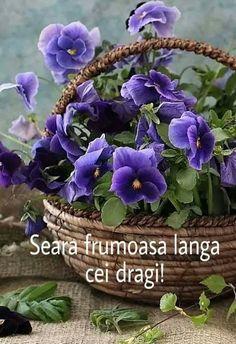 Indoor Gardening Supplies, Container Gardening, Orange Flowers, Spring Flowers, Garden Posts, Garden Ideas, Visual Display, Flowers Perennials, Autumn Garden