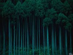 teal forest