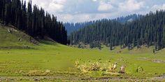 yuvrajtravelers Chandigarh: Kupwara… Rightfully the Crown of Kashmir India