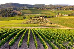 Brunello de Montalcino - Italian wines served at Market Alley Wines.
