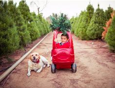 Peltzer Pines Christmas Tree Farms Fresh Cut Christmas Trees, Pine Christmas Tree, Christmas Tree Delivery, Christmas Tree Photography, Cypress Trees, Evergreen, Farms, The Farm