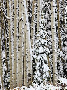 A recent fall snow storm covers parts of the Gunnison National Forest, Colorado | Jody Grigg Photography