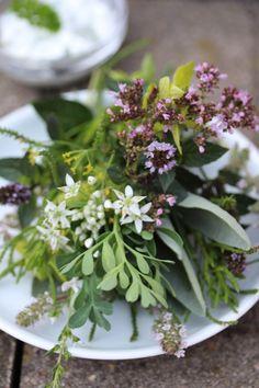 Herbs from the kitchen garden