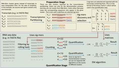Researchers at the University of North Carolina at Chapel Hill propose a novel RNA-Seq quantification method, RNA-Skim, which partitions the...
