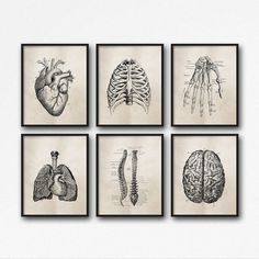 cience Anatomy Wall Art -
