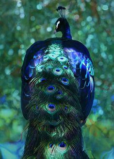 Pavone con vera pavoni penna e vetro corona Th/üringer Natale 52-019 vetro-uccello verde